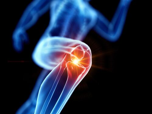 Human Knee 2
